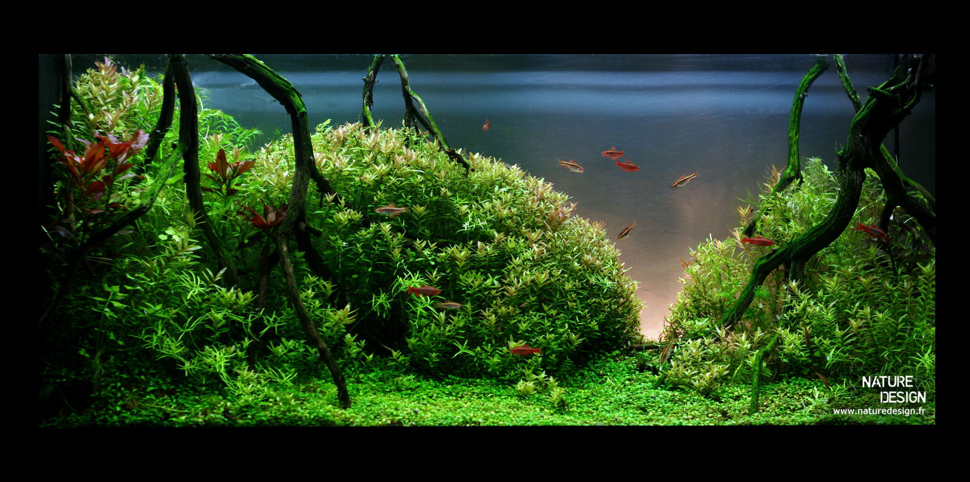 ... vegetalise en symbiose avec un aquarium sur mesure. Naturedesign.fr