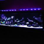 aquarium eau de mer 1200L
