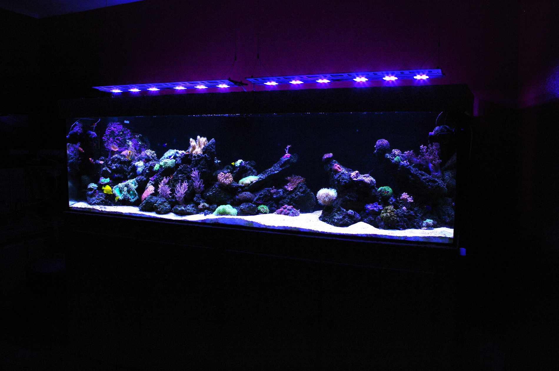 GALERIE  Mur Végétal et Aquariums sur mesureNature Design -> Aquarium Eau De Mer Design