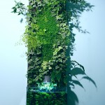 colone végétale en aquaponie