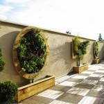 mur vegetaux extérieurs
