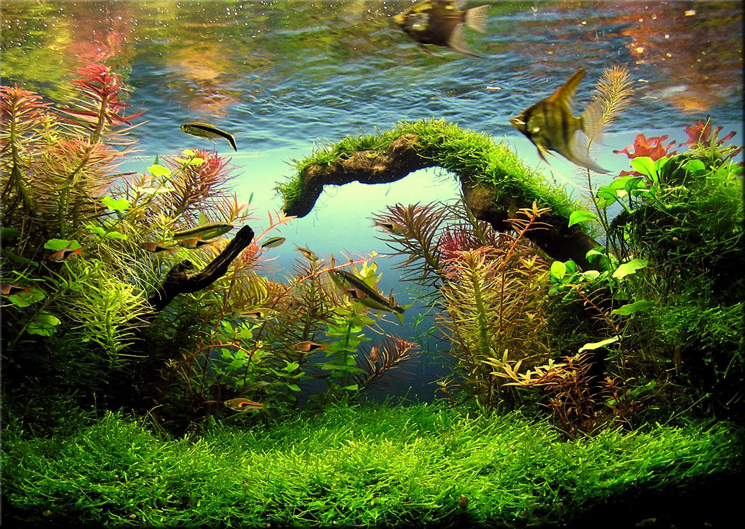 Les plantes de l 39 aquarium mur v g tal et aquariums for Aquarium interieur