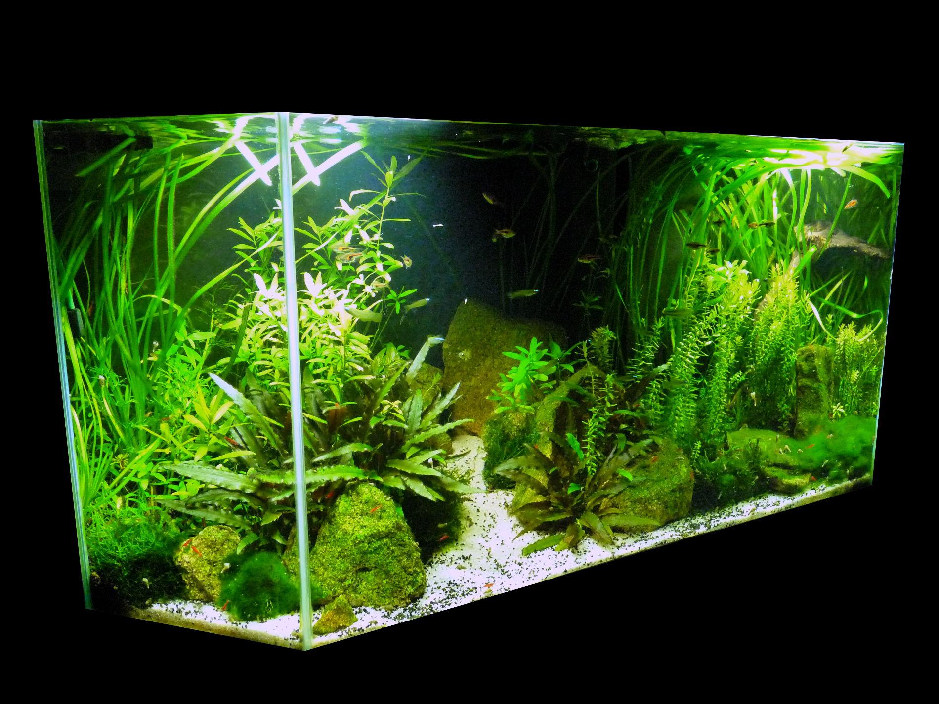 galerie mur v g tal et aquariums sur mesure nature design. Black Bedroom Furniture Sets. Home Design Ideas