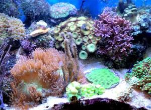 Nano aquarium eau de mer.
