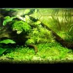 Nano aquarium-plantes locales