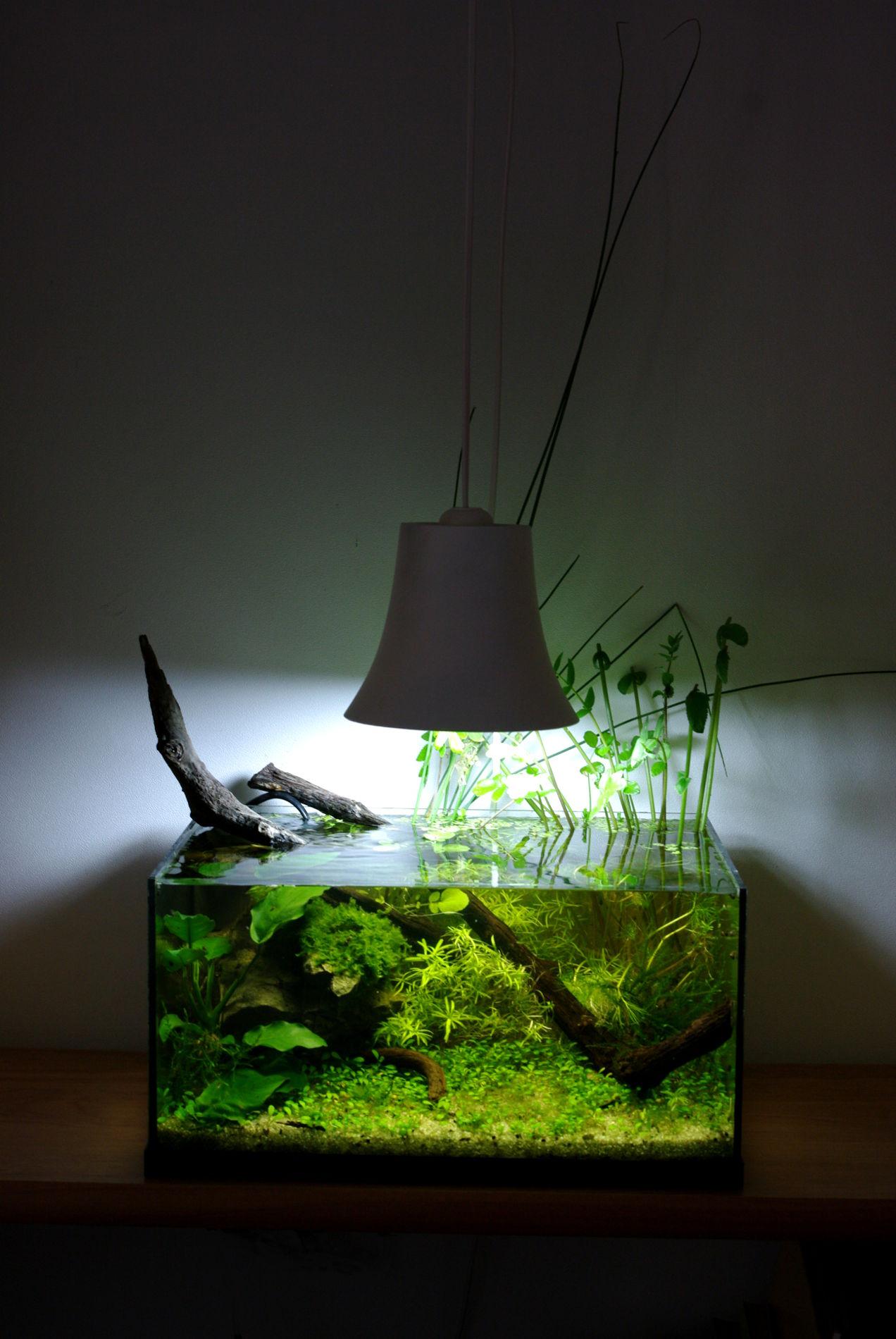 Galerie mur v g tal et aquariums sur mesure nature design for Aquarium cadre