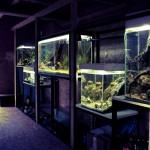 aquarium ferme du hérisson2