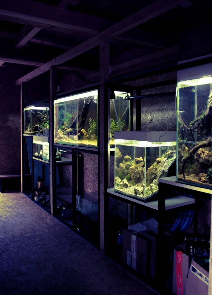 installation d'aquariums