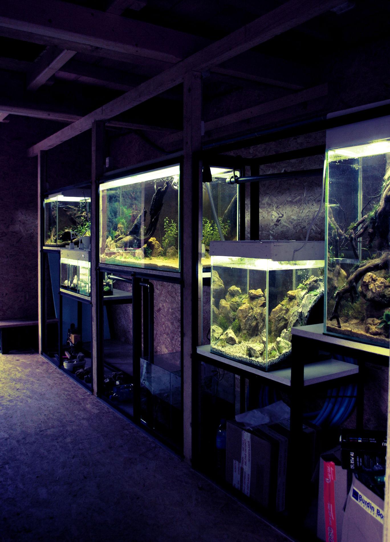 Aquarium d interieur design id es de for Aquarium interieur