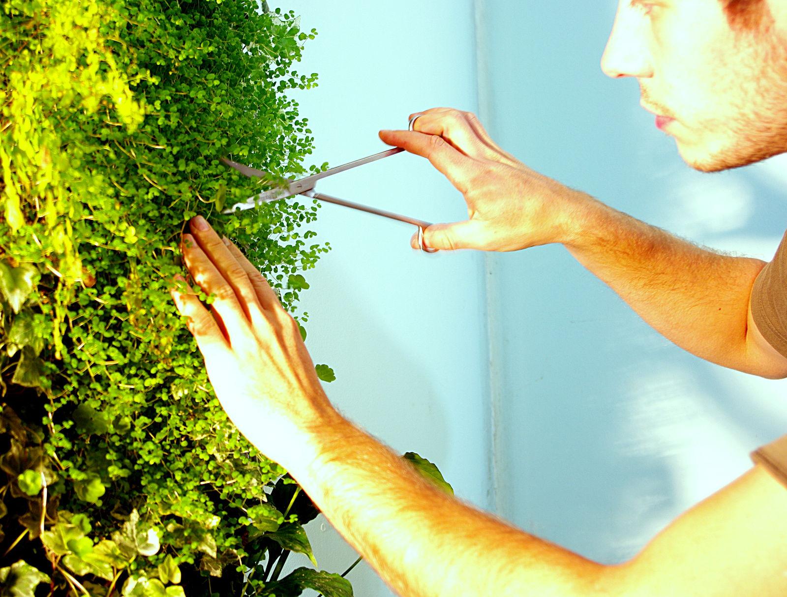 entretien d 39 un jardin vertical mur v g tal et aquarium. Black Bedroom Furniture Sets. Home Design Ideas