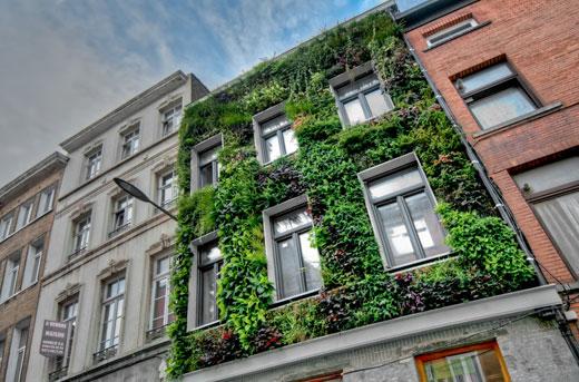 jardin vertical extérieur