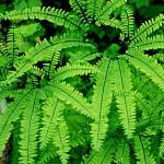 plante jardin vertical