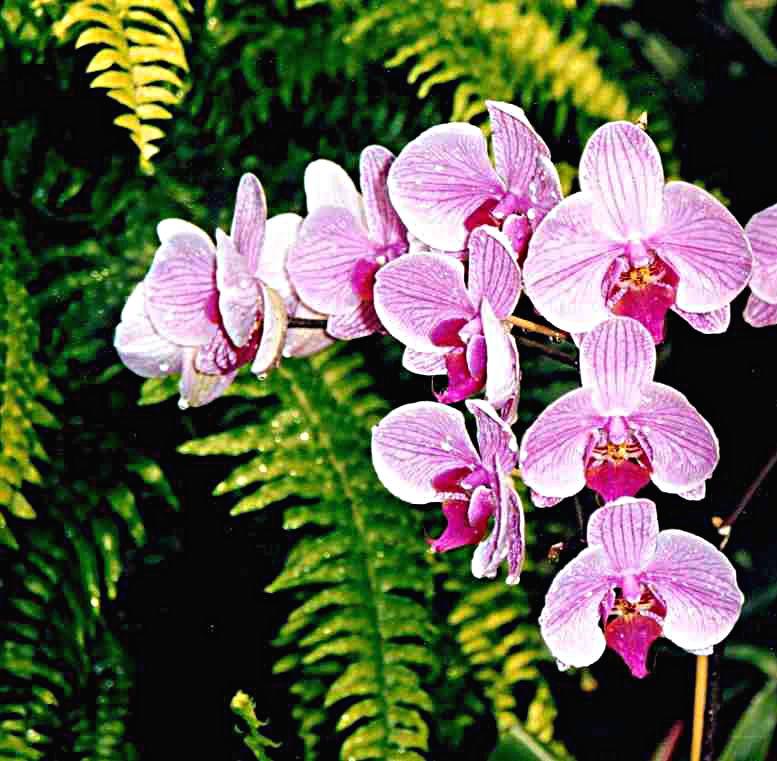 plante mur végétal orchidee