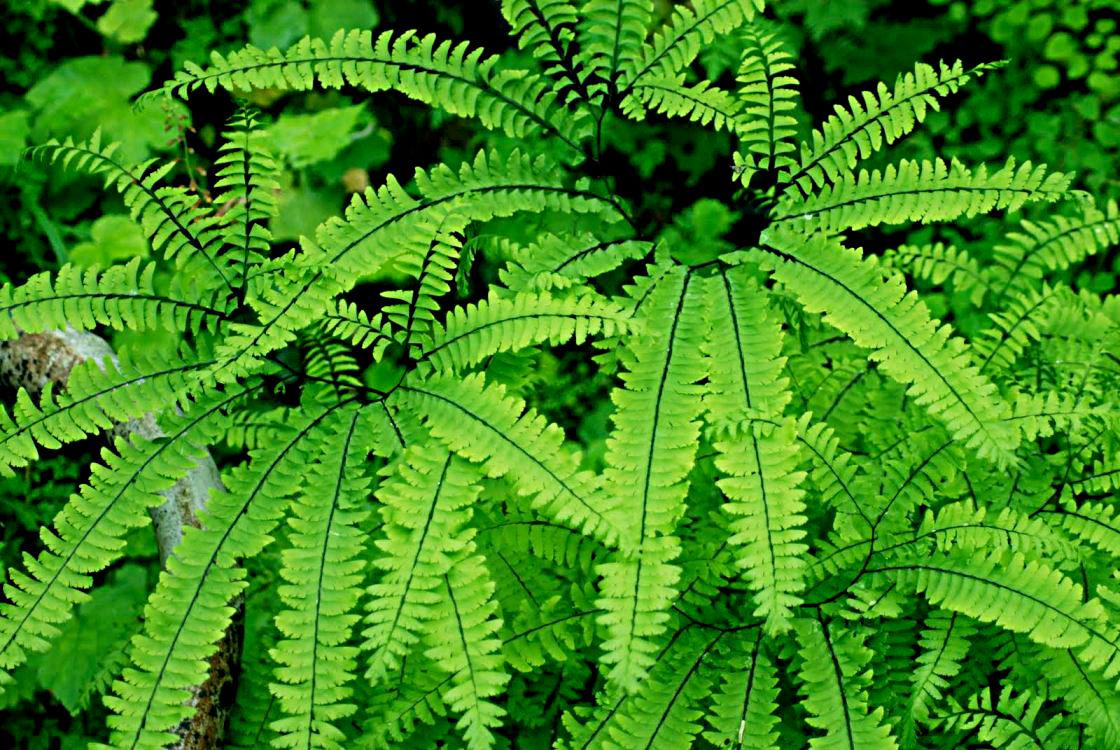 Plante Sur Les Murs les plantes à la verticale - mur végétal nature design.